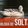 Sociologia do Soltar